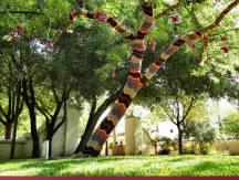 Libbey Park Tree 1