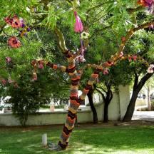 Libbey Park Tree
