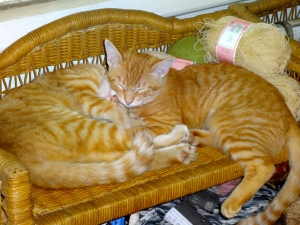 ButterNut and Rusty on Wicker