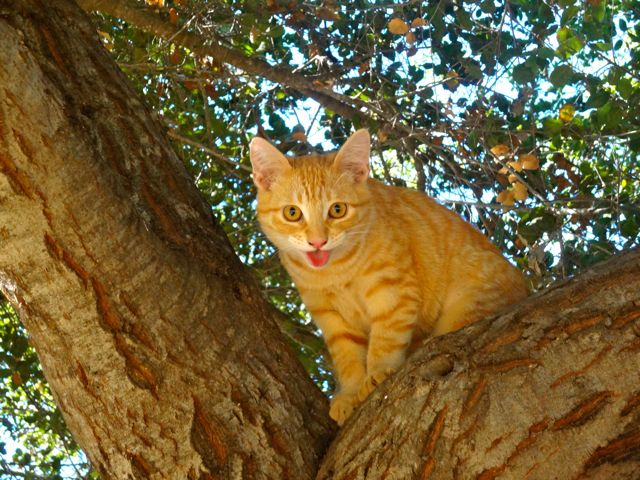 ButterNut in Tree 1