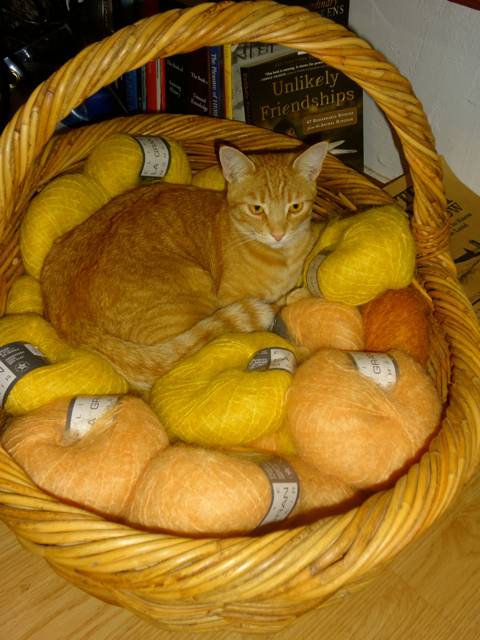 Rusty in Basket of Yarn